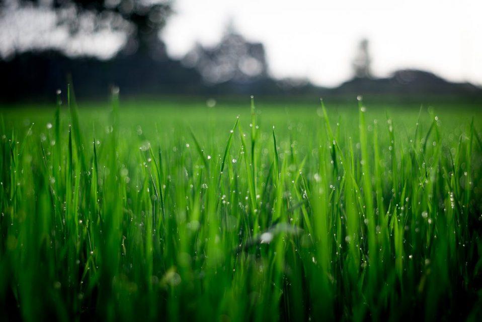 harris-landscape-construction-lawn-care