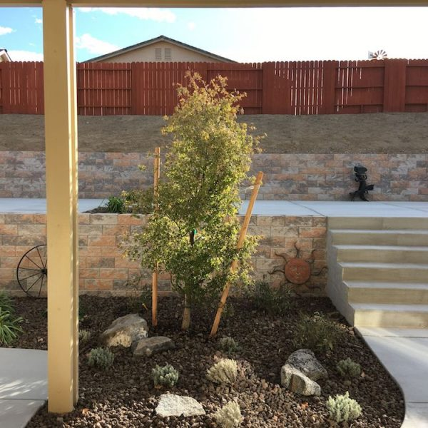 harris-landscape-construction-reno-tree-plant-installation